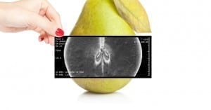 X-ray pear - Food Science
