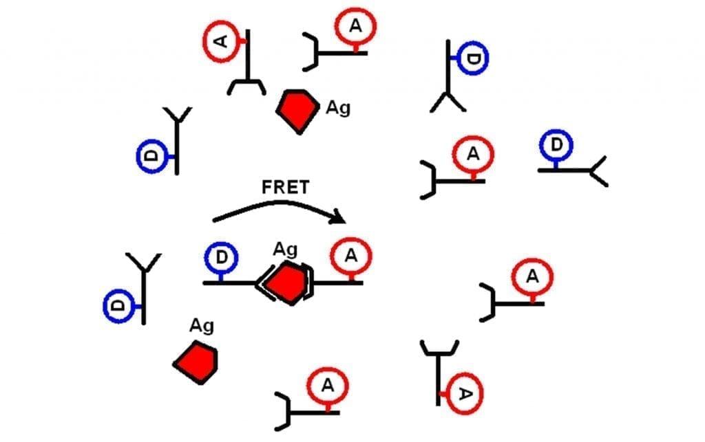 The principle of FRET Fluorescence based immunoassay