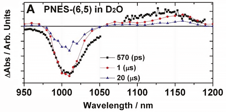 NIR transient absorption of PNES- SWCNT
