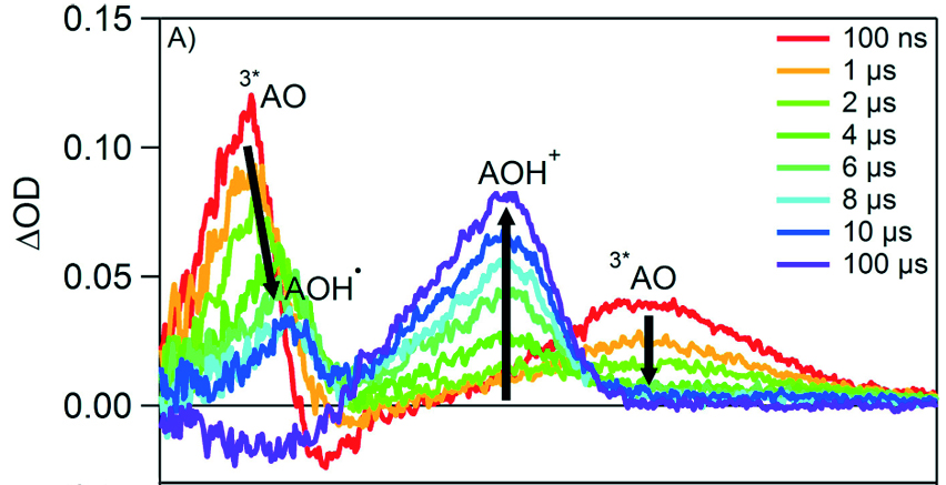 Photo-induced transient absorption spectra of 40 μM acridine orange during the PCET mechanism with 1 mM tri-tert-butylphenol (ttbPhOH) in acetonitrile; excitation was at 425 nm.